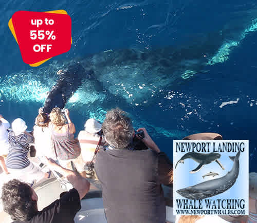 Newport Landing Whale Watching & Sportfishing
