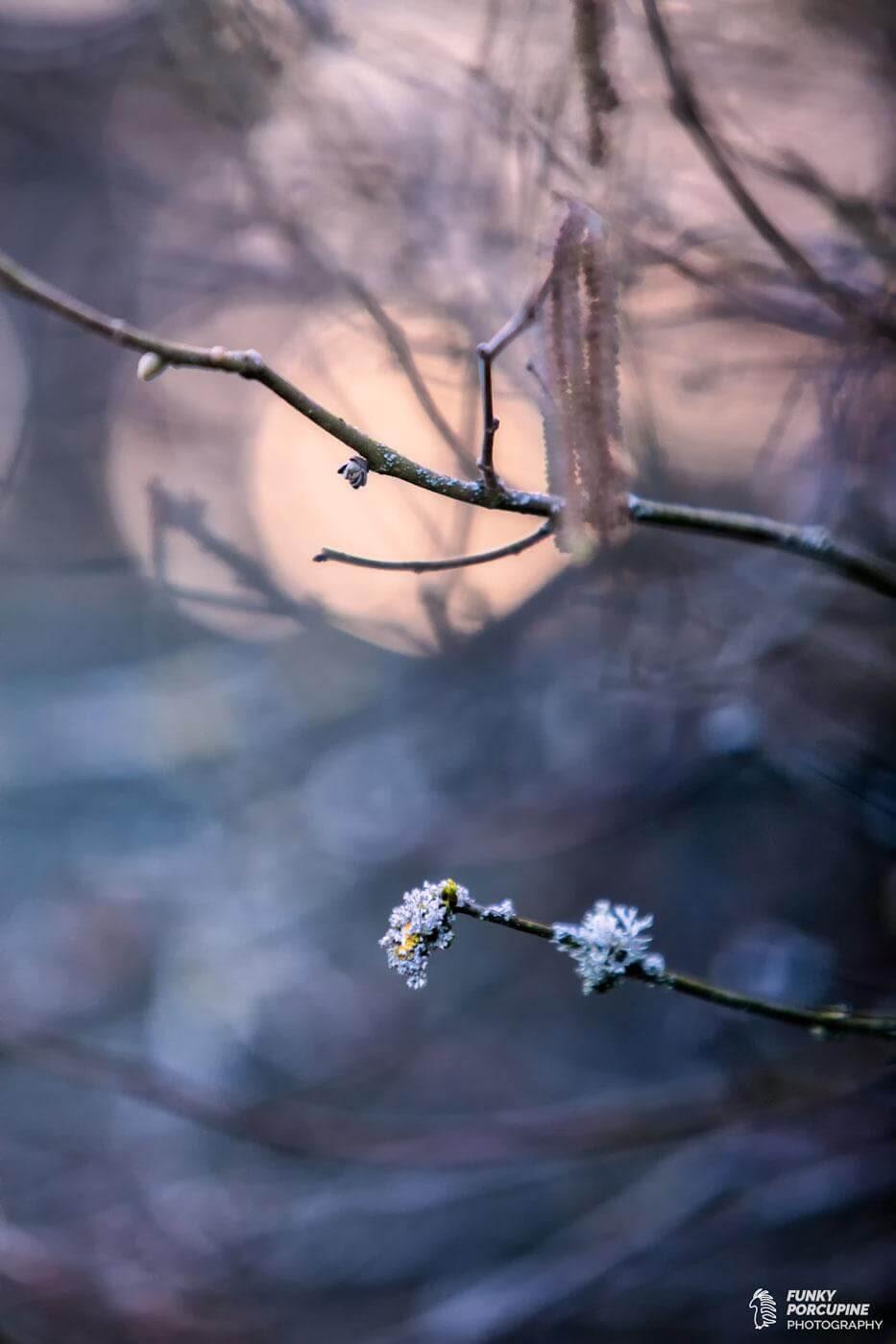 Abstrat winter