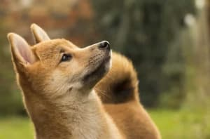 decentralized-exchange-launches-for-dogecoin-swaps