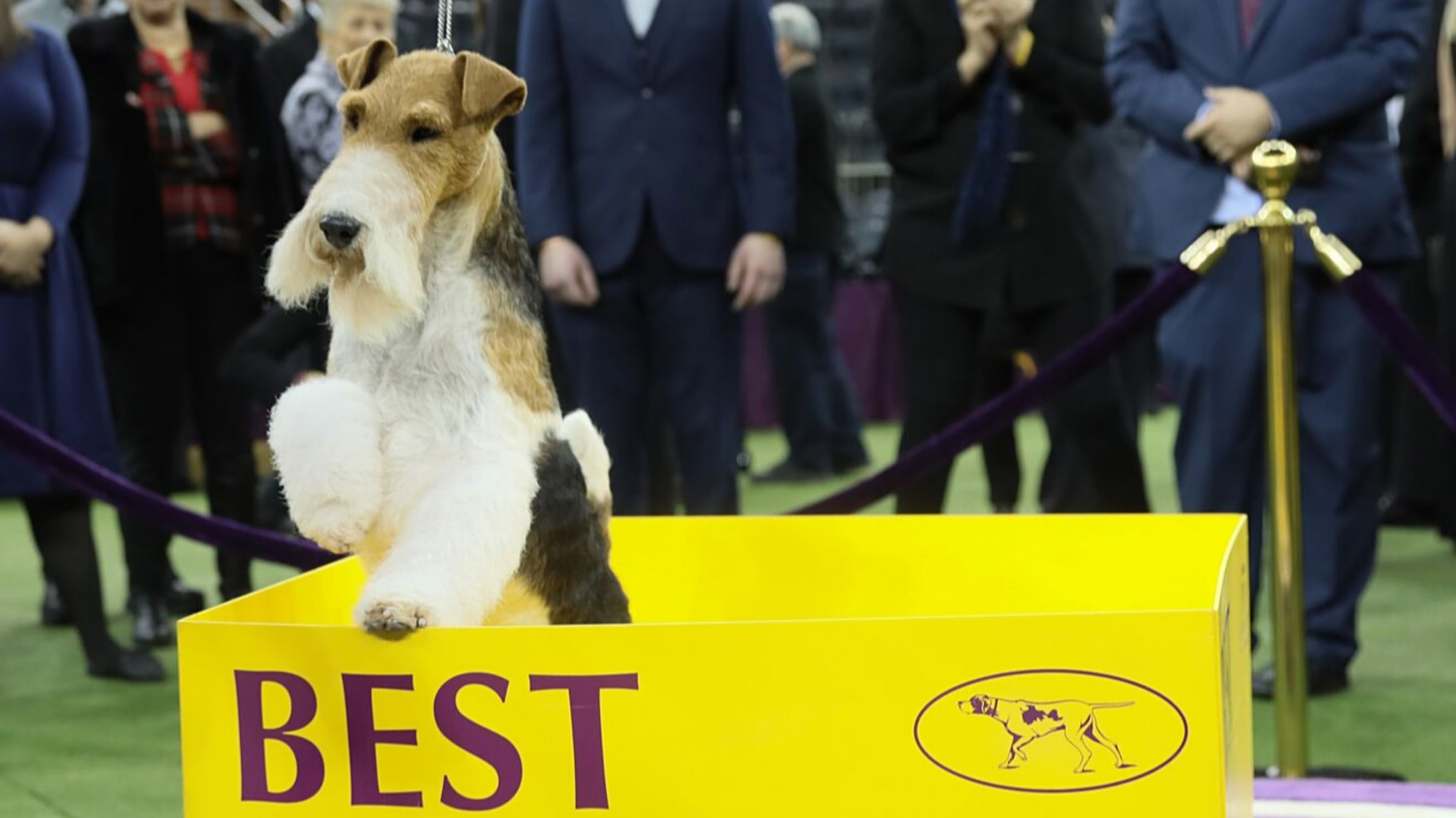 Westminster Dog Show 2020 Dates.2020 Wkc Dog Show Updates