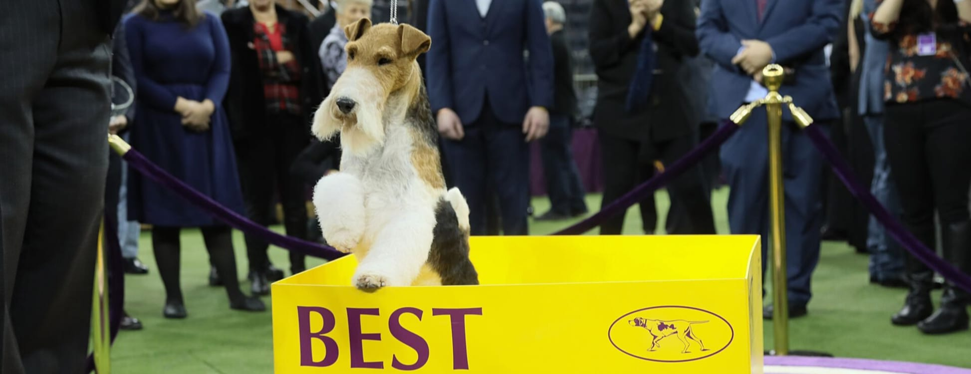 Watch Westminster Dog Show 2020.Homepage