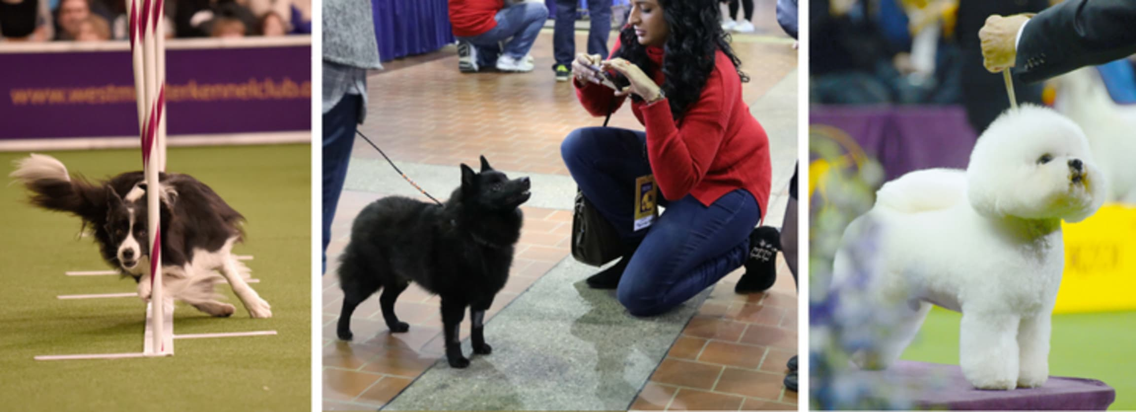 National Dog Show 2020 Dates.Schedule Of Events
