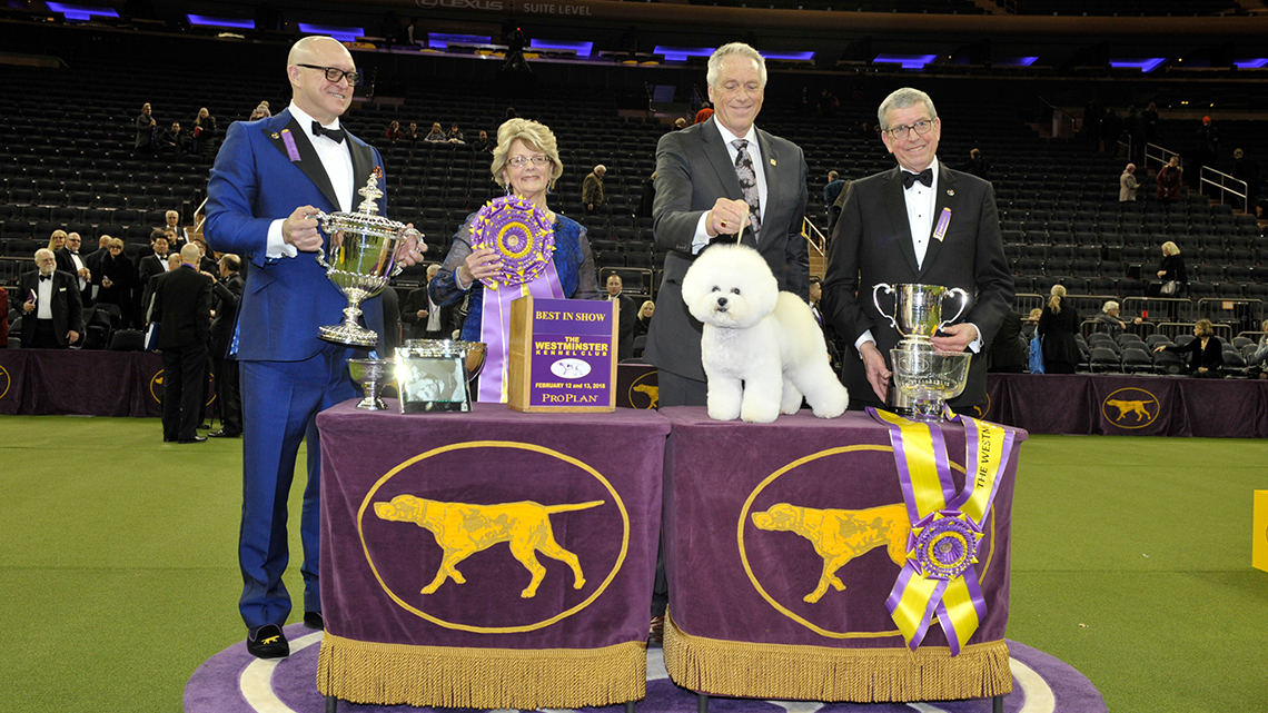 westminster kennel club best in show fox sports