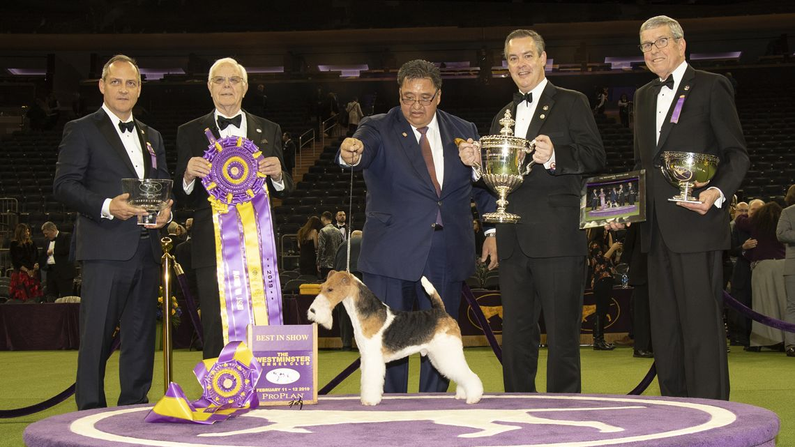 2019 Best In Show Image