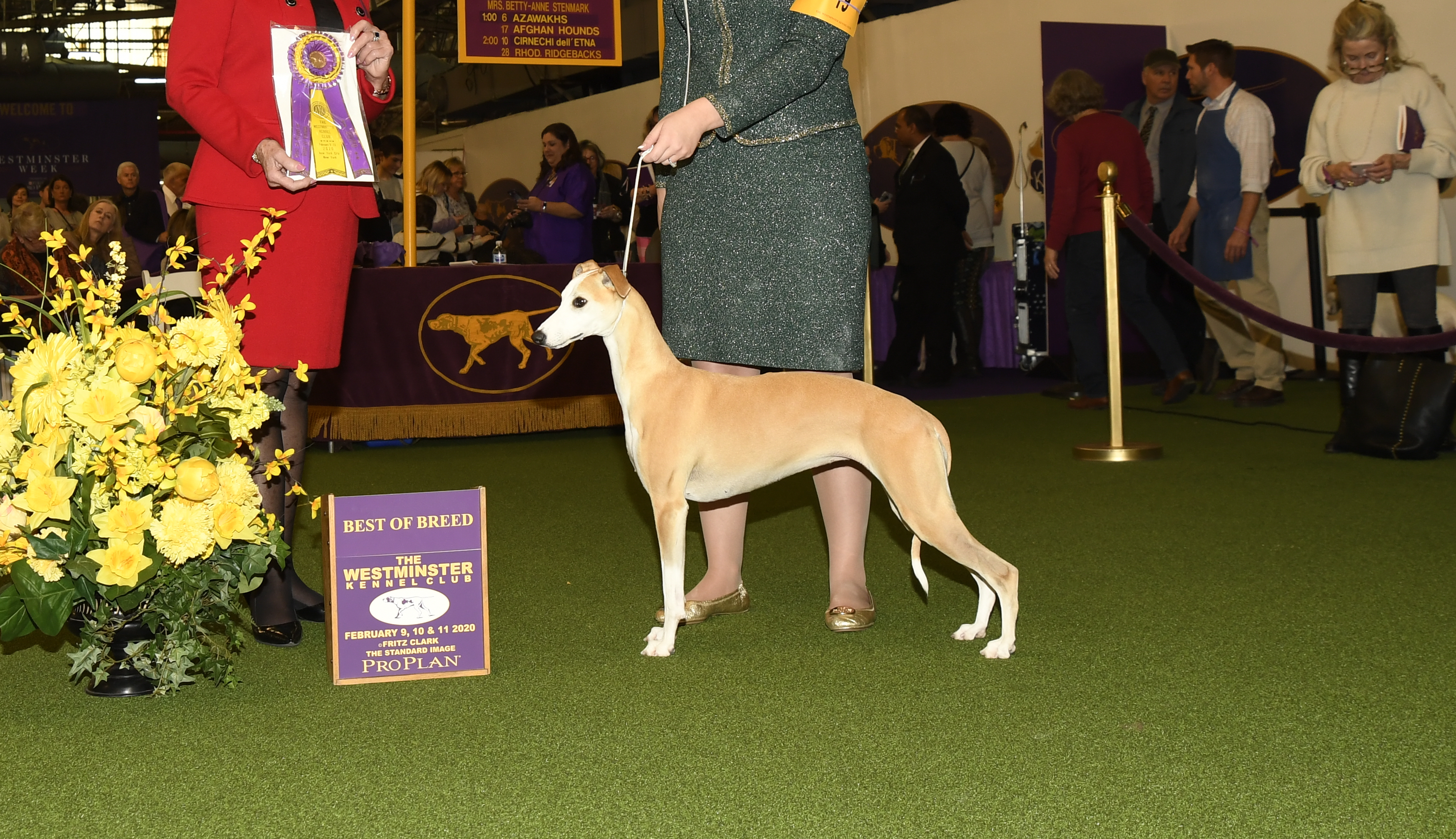 2020 Reserve Best In Show Image