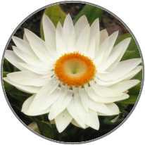 Yoga Dhyanam logo