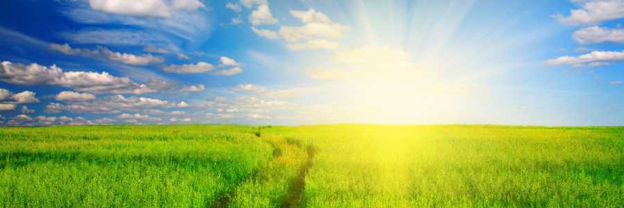 The Power of Now Mindfulness Training: 6-Week Course,Bedfordale