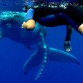 Tonga Whaleswim and Yoga Retreat 2015 (FULL)