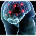 The Brain with Yoga in Mind