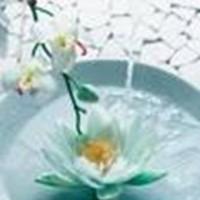 Viyett Information Sessions For February 2012