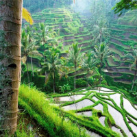 Nourish and Nurture Retreat - Ubud, Bali