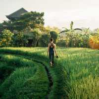 Bali Goddess Yoga Retreat with Beth Borowsky - $100 gift for YOU!