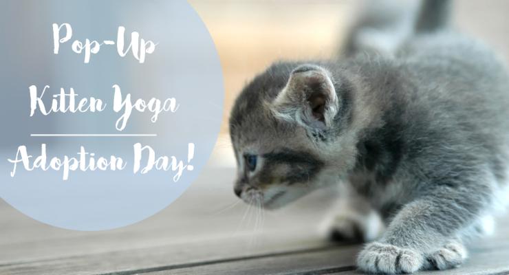 Pop-Up Kitten Yoga Charity Adoption Day