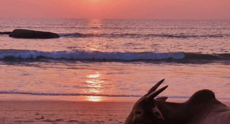 10 Day Yoga Holiday Retreat  | Goa, India -26th Feb - 7th Mar