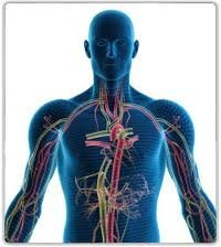 AN INTRODUCTION TO THE ENDOCRINE SYSTEM / YOGA
