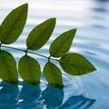 Hatha Yoga Kriyas - Yogic Detox Sunday 13 Sept, 8.00 - 2pm