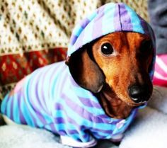 Meditation Workshop - Niyamas in your Pyjamas!