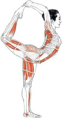 Anatomy and Movement for Yoga Teachers