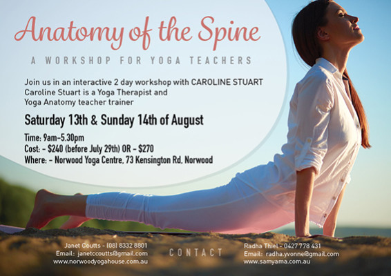 Anatomy of the Spine - Antomy for Yoga