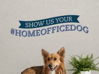 June cotswoldHome office dog q7aicp