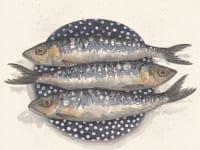 sardines Kirsten Jones y3culd