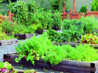 Kitchen Garden Design Multiple Beds in row