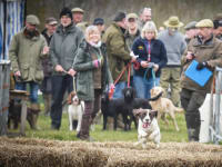 Gundog scurries Thame Country Fair