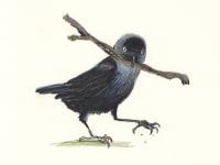 Jackdaw stick