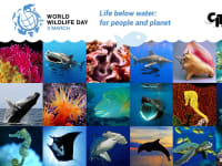 World Wildlife Day 2019 Header Image