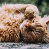 cats2 l7tuob