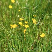 meadows 1