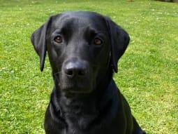 Diabetes   image of Lucy the dog xbicyy