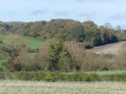 HEDGEROWS around fields