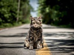 Pet Semetary Film Cat
