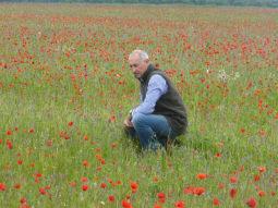 Wildflower Meadows Maintenance in the field
