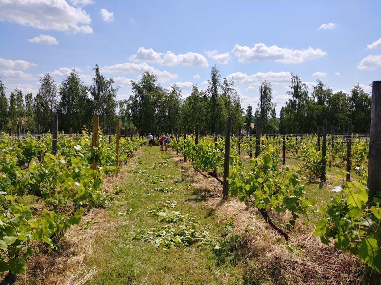 1907 the vineyard 3
