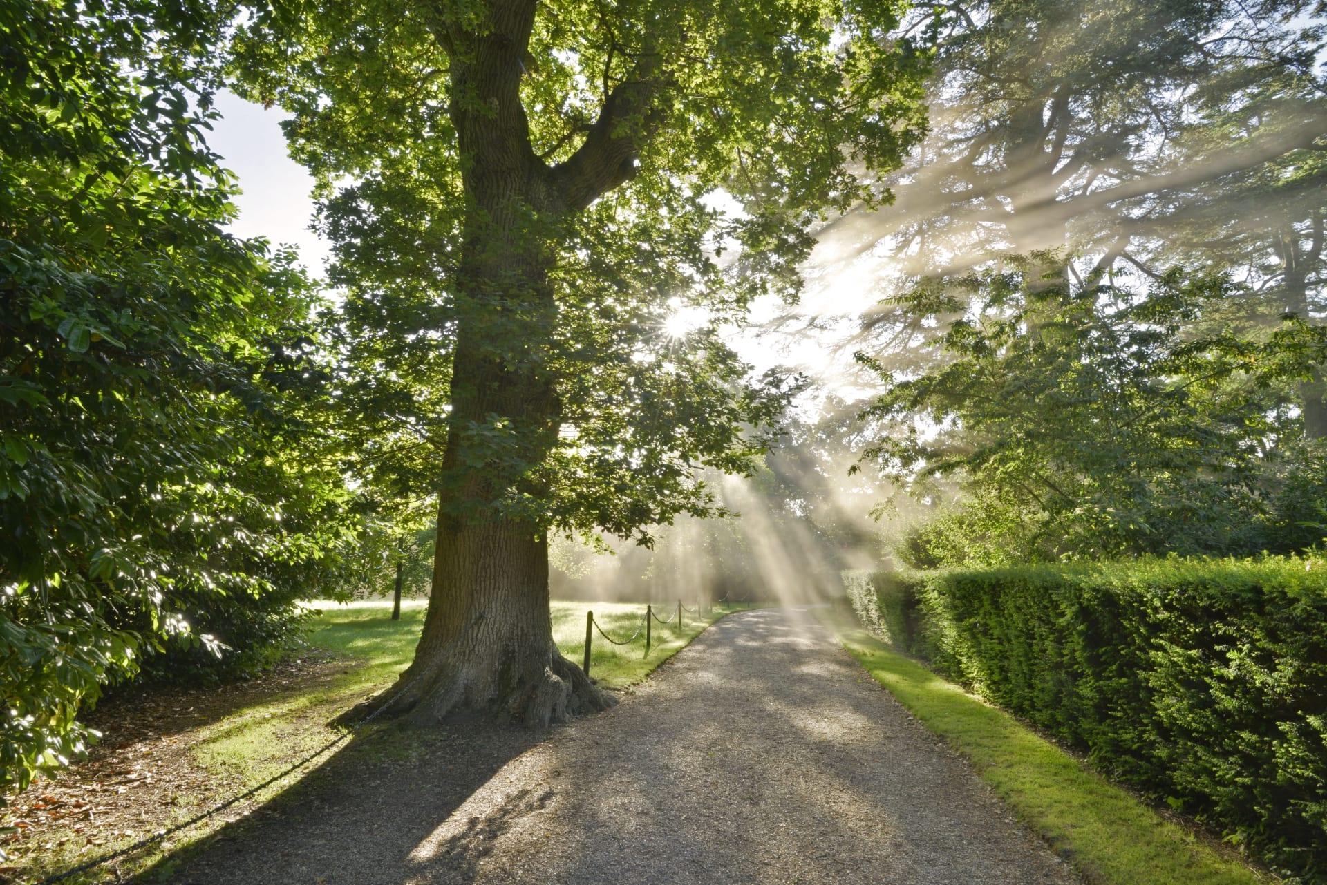 BlenheimPalace Park And Gardens Formal Gardens