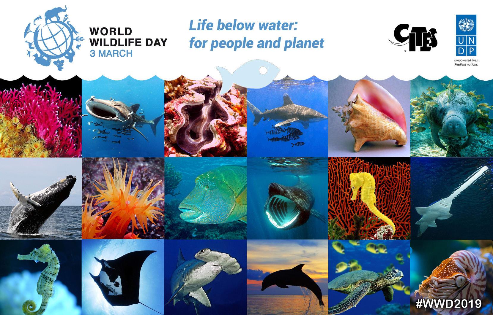 World Wildlife Day 2019 Header Image