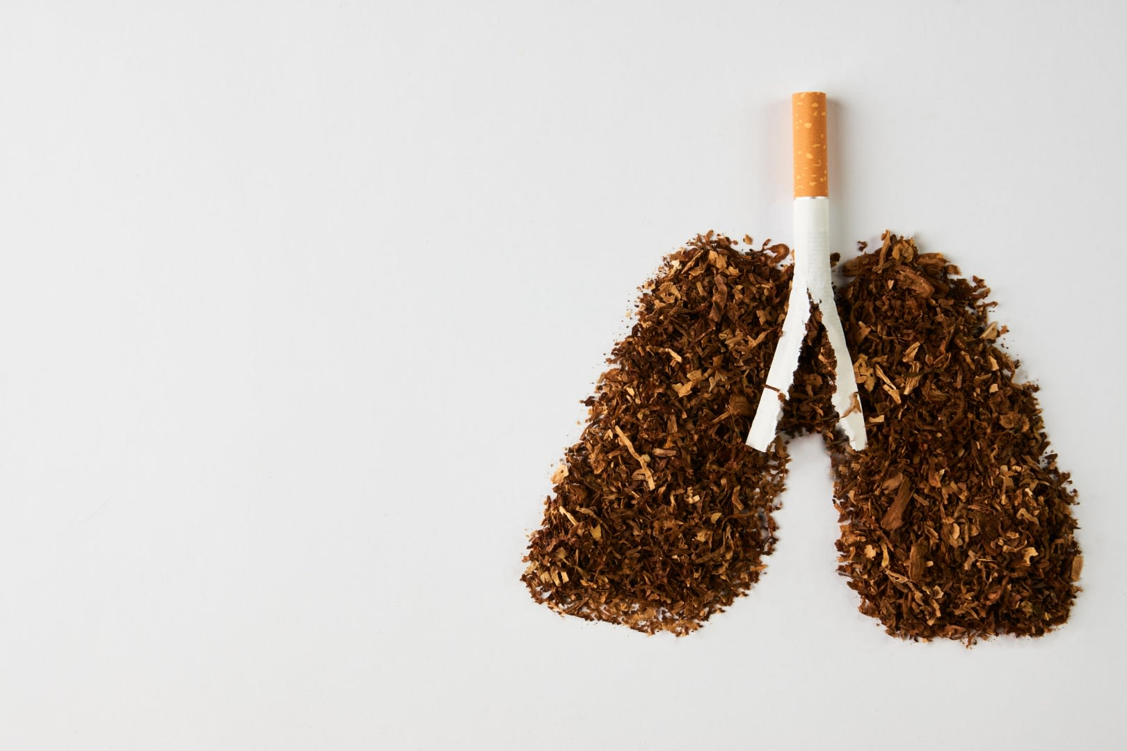 World No Tobacco Day Pair of Lungs made of Tobacco