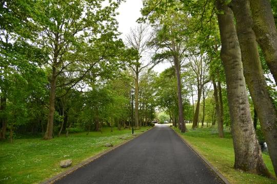 Driveway with Bluebells qavmvc
