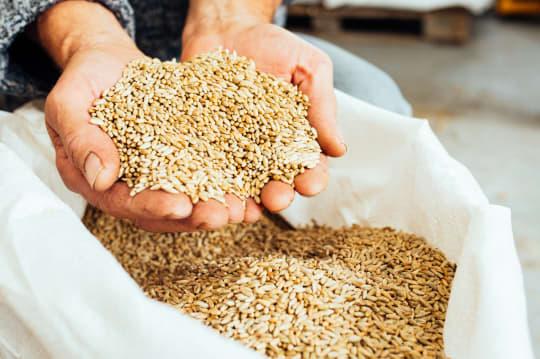OAD Farm Grain en4las