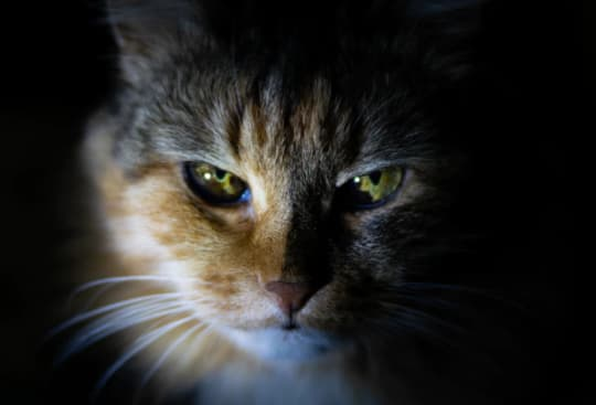 catbeauty vrojx5