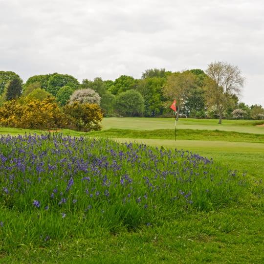 Tadmarton Heath Lavender