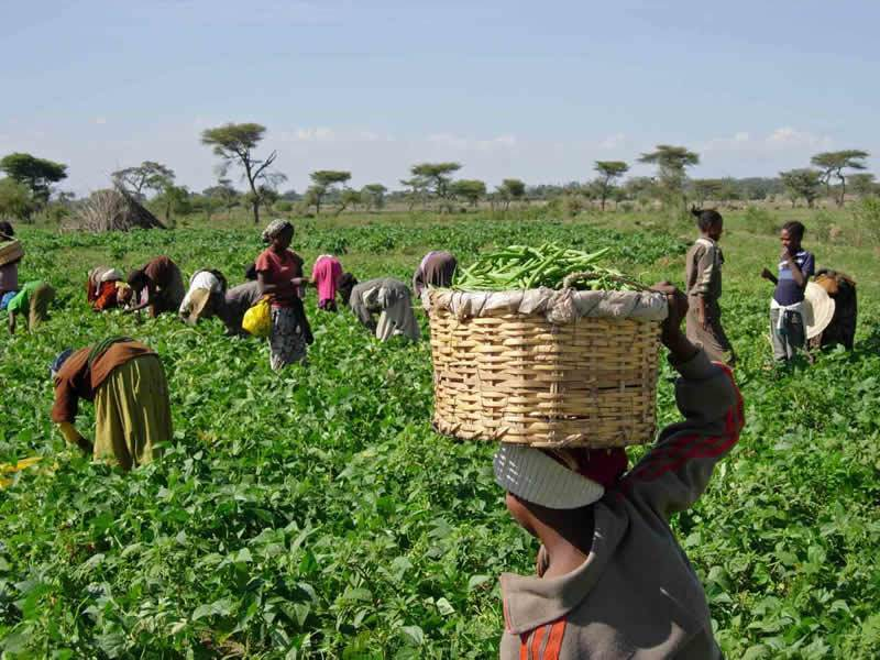 Expert warn farmers against cultivating with early rain