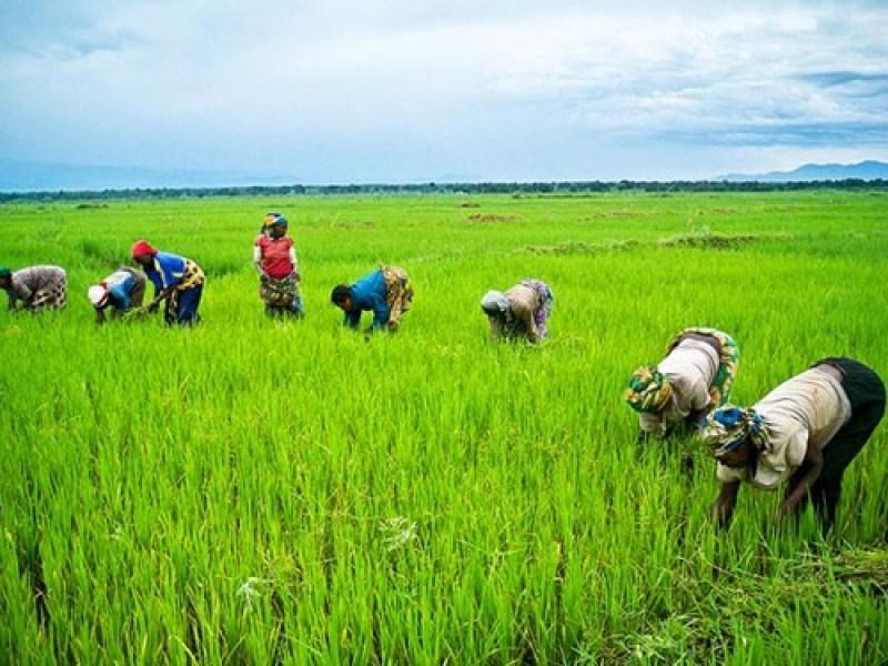 USAID launches US0m agribusiness investment initiative in Nigeria