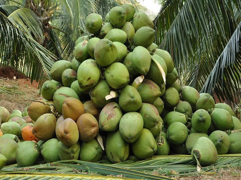 Lagos To Partner FAO To Boost Coconut Production