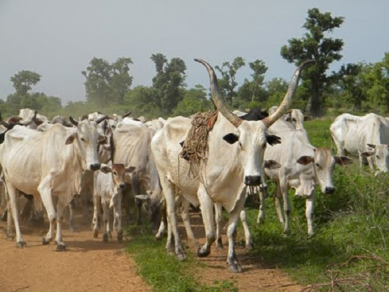 Food production to increase with ban on open grazing