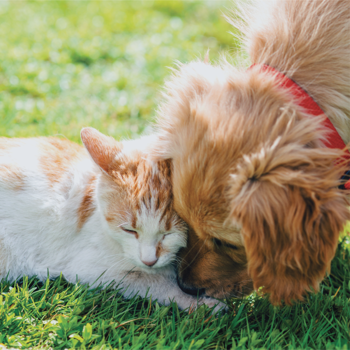 A cat and a dog at The Preserve at Forbes Creek in Kirkland, Washington