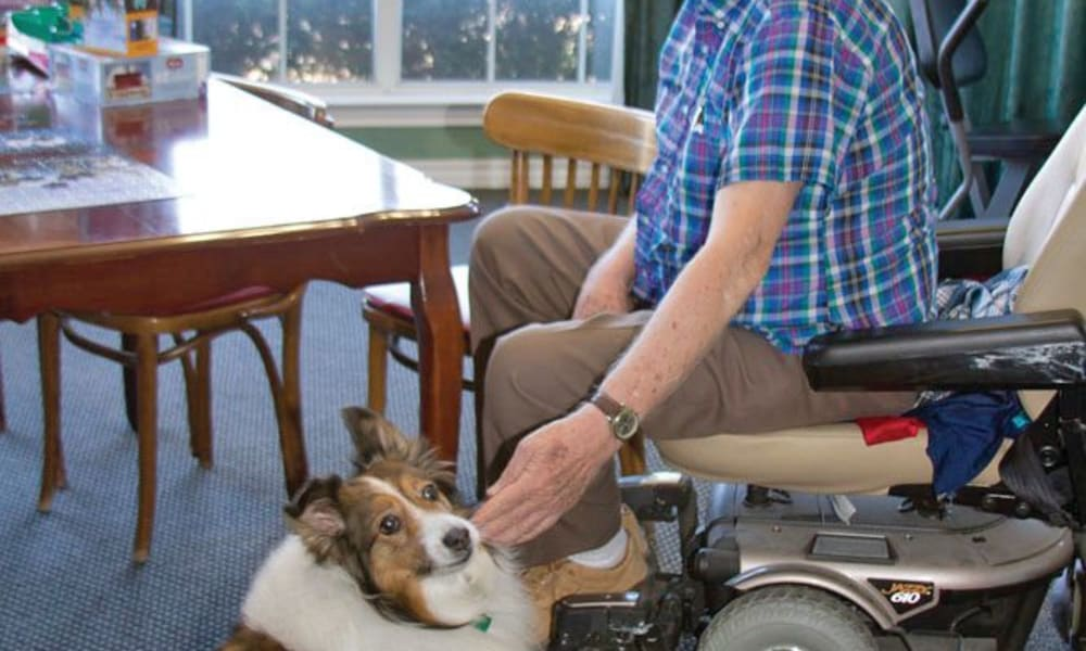 Resident petting a dog from a motorized chair at Quail Park of Granbury in Granbury, Texas