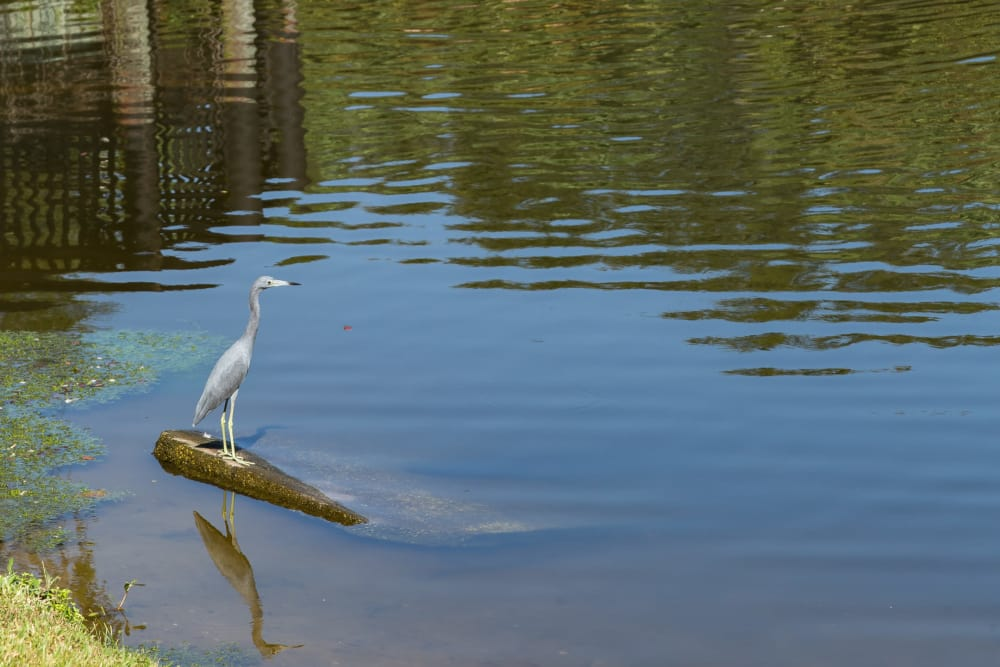 Lake and heron at Alvista Sterling Palms in Brandon, Florida